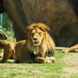 Basel Zoological Garden