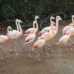 حديقة الحيوان