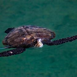 Dubai Turtle Rehabilitation Project