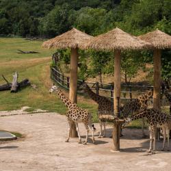 Zoo de Prague