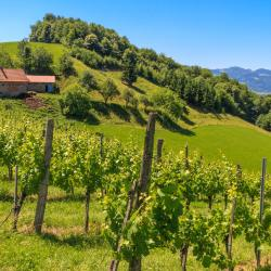Styrian Wine Road 11 spa hotels