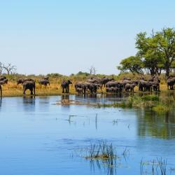 Caprivi Strip 4 guest houses