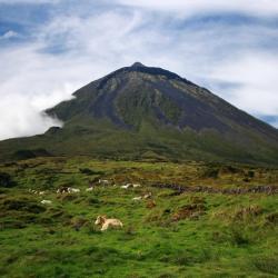 Ilha do Pico 12 casas de campo
