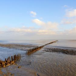 West Frisian Islands 303 pet-friendly hotels