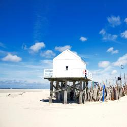 Vlieland 7 pet-friendly hotels