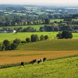 Limburg 357 pet-friendly hotels