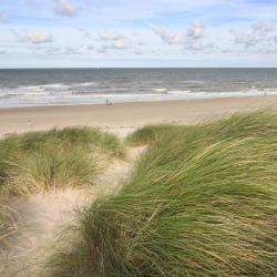 Dutch Coast 1477 pet-friendly hotels