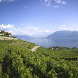 Lake Geneva 178 accessible hotels