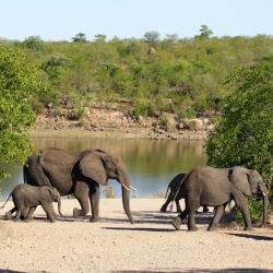 Kruger National Park 9 hostels