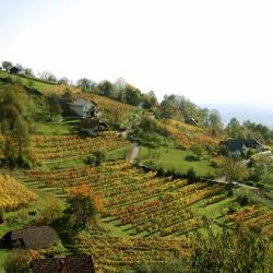 Dolenjska (Lower Carniola)