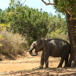 Yala National Park 40 accessible hotels