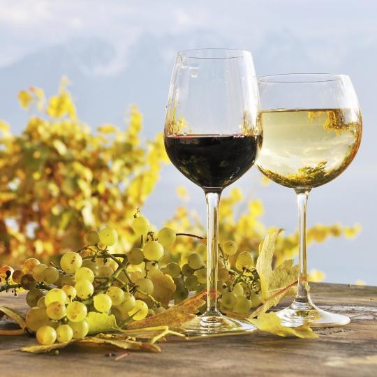 Дегустация вин в восточных поселках