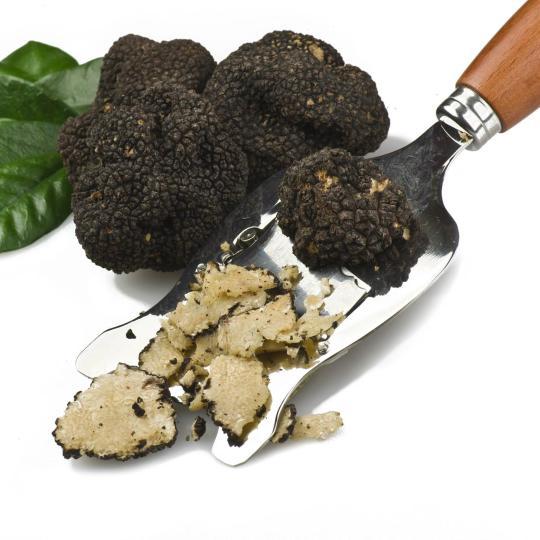 Truffle – the gourmet gem