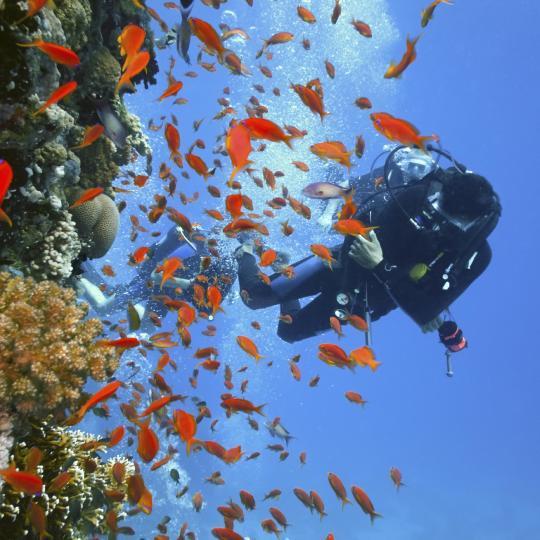 Diving Paradise, Koh Tao