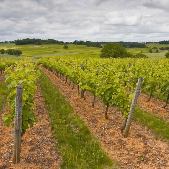La strada del vino nella Valle della Loira