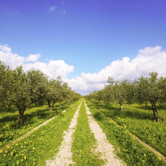 Olive Oil Museum in Fasano