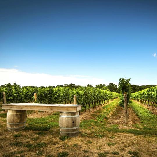 A taste of Niagara's Wine Country