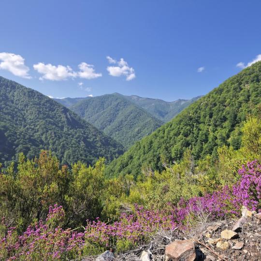 Reserva Natural Integral de Muniellos