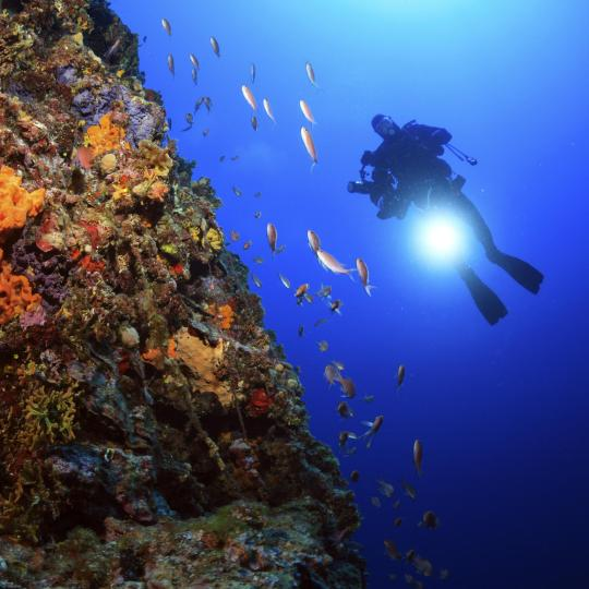 Diving in the crystal clear Adriatic
