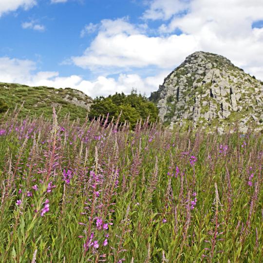 Escalader le Mont Gerbier-de-Jonc
