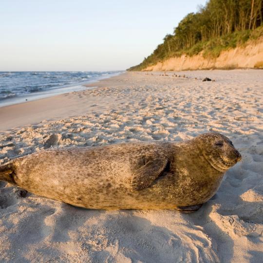 Seal Sanctuary in Hel