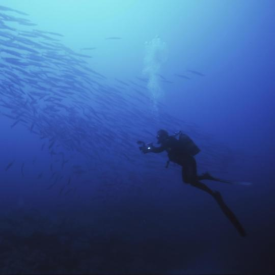 Scuba diving off the Madeira coast