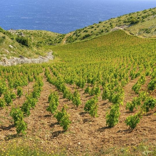 South coast wine roads