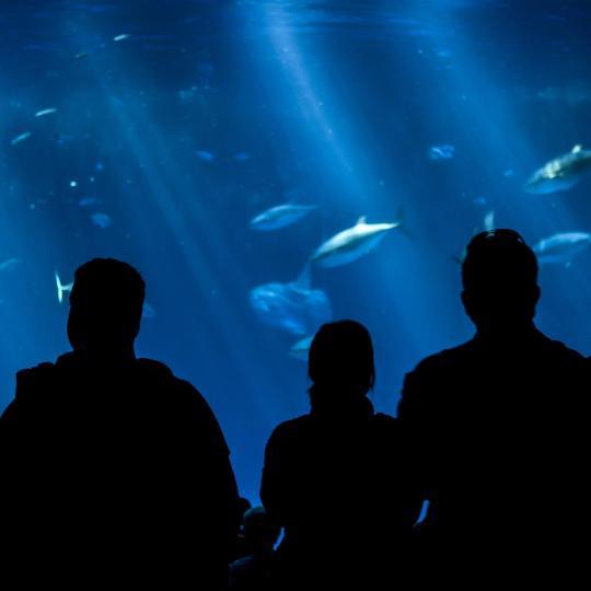 Mini Châteaux Land and Grand Aquarium De Touraine