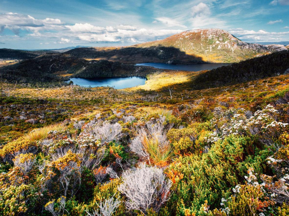 An ancient forest landscape, Tasmania