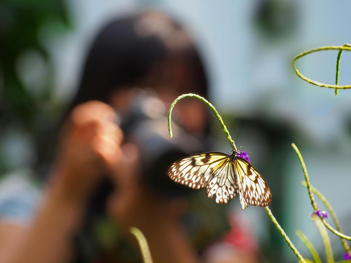 Photographing butterflies at Tambopata National Reserve