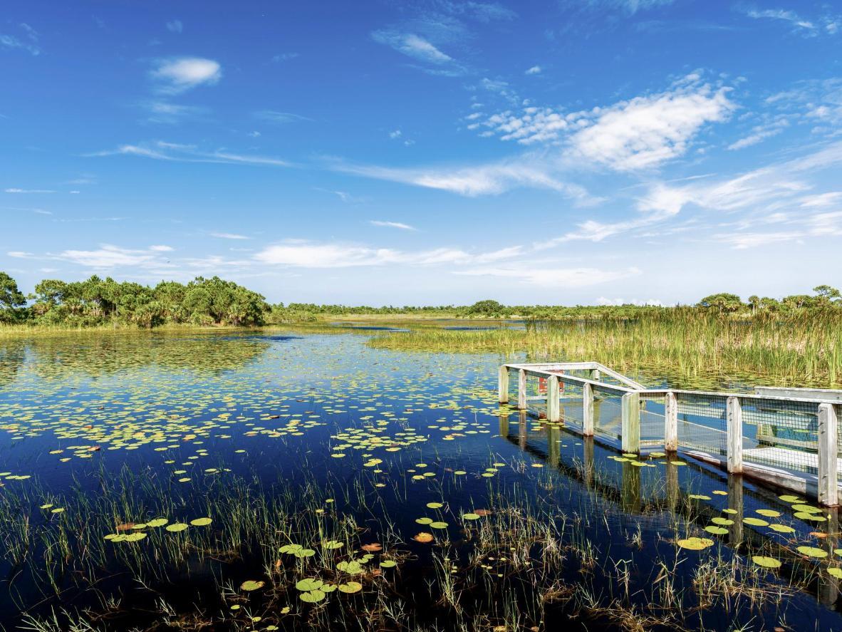 Azules y verdes vivos en el parque nacional Everglades