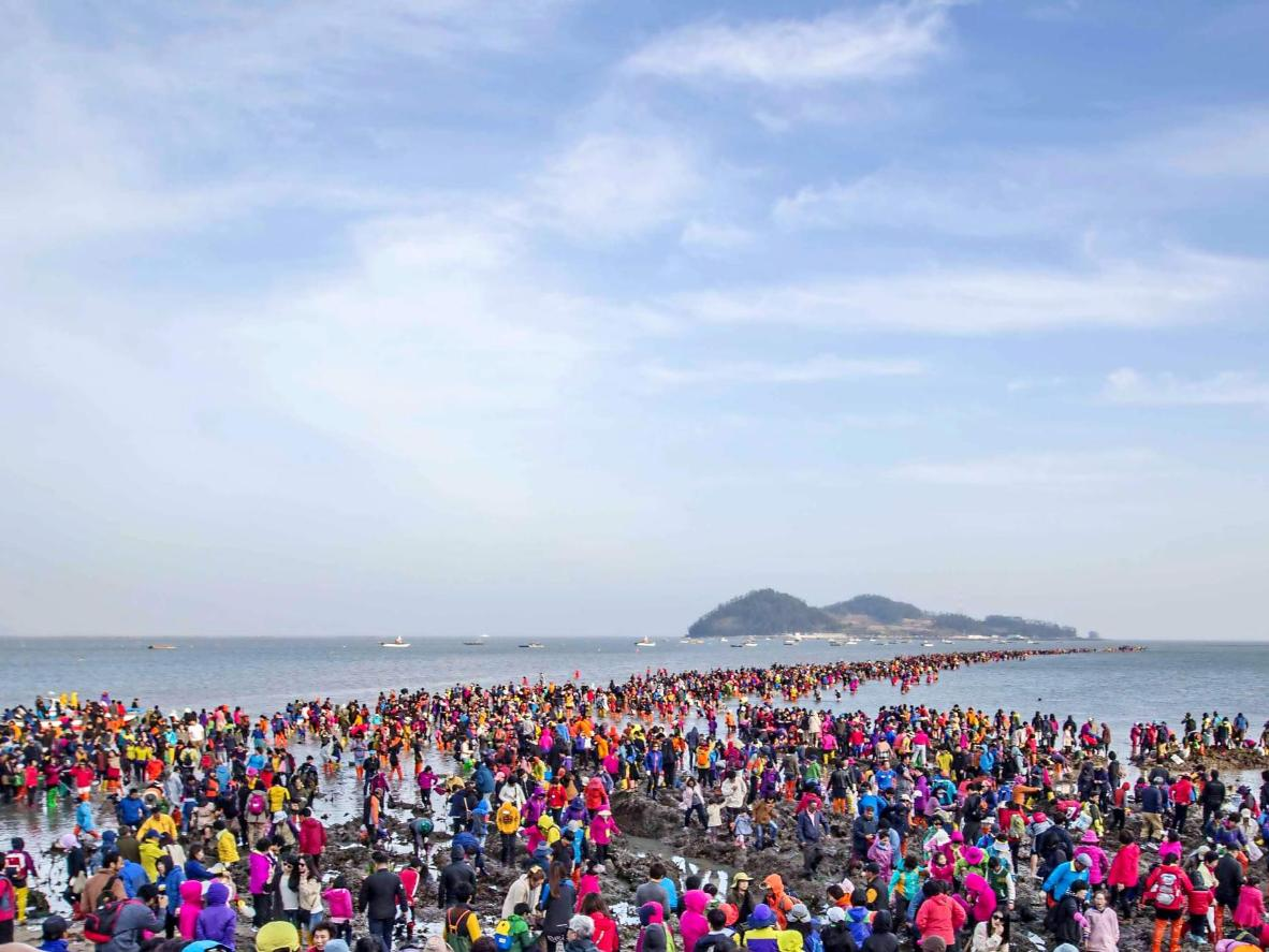 Pesta Jindo Sea-Parting sedang rancak berlaku