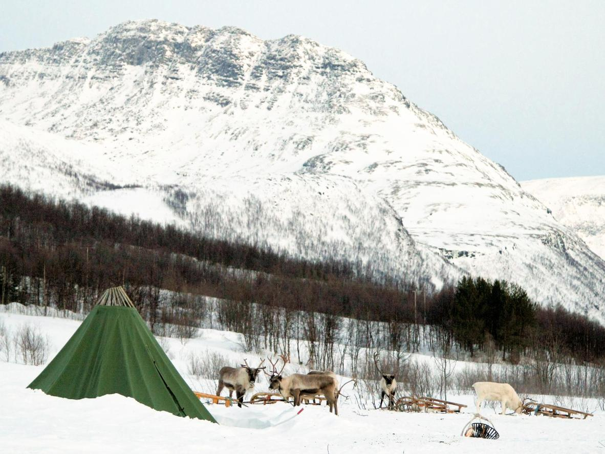 Tromsø is the best place to learn about reindeer and the Sami people's shared history