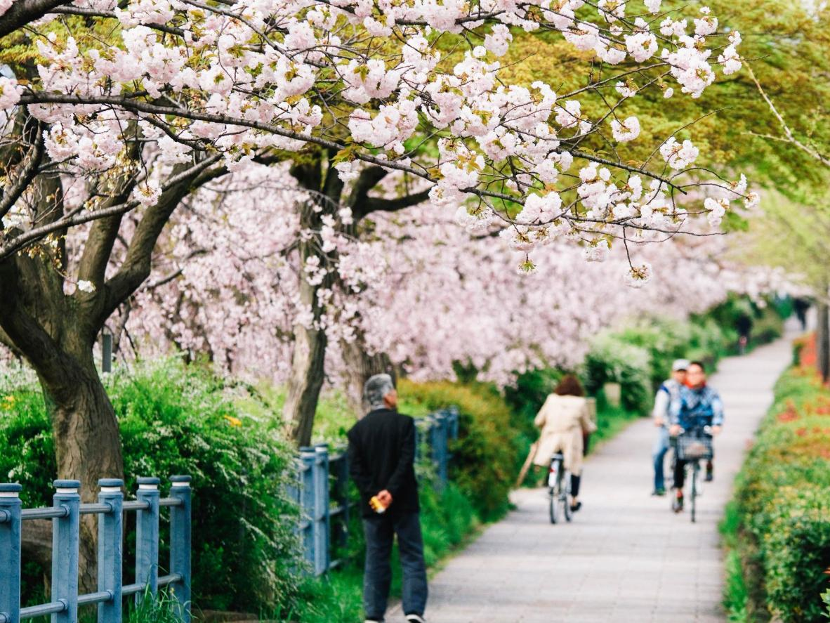 Japan's former imperial capital is laid out in a grid pattern, so it's easy to navigate the ancient streets by bike