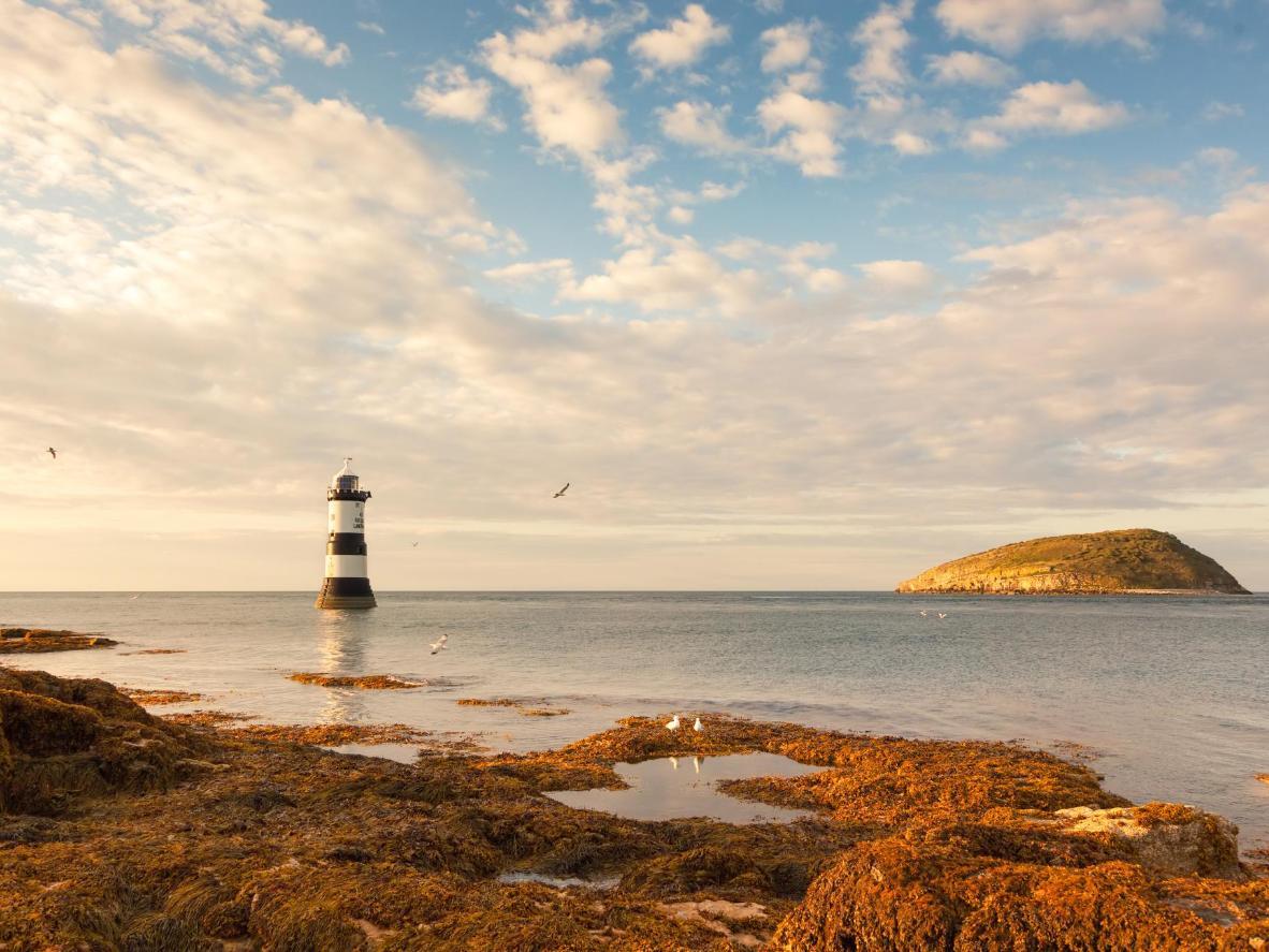Puffini saar Walesis