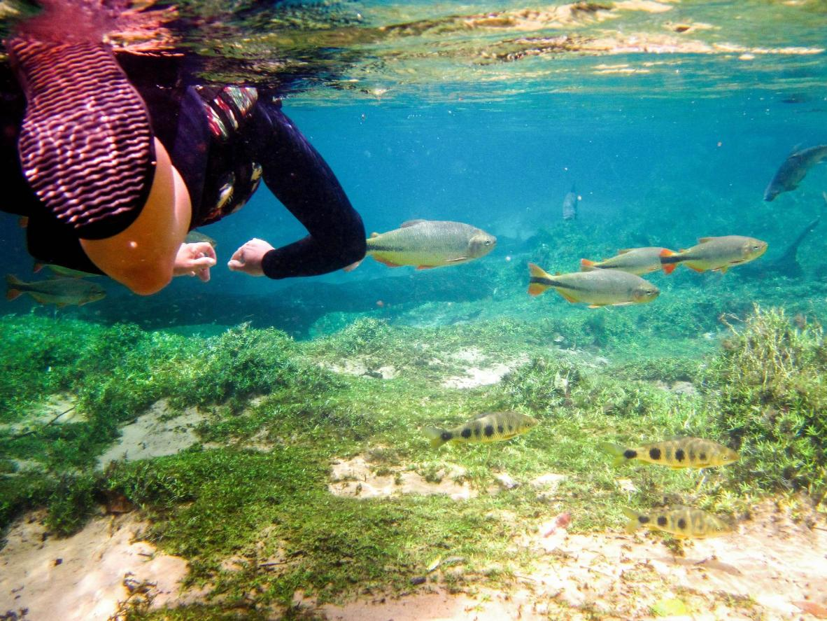 Snorkelling or scuba diving in Bonito is a must