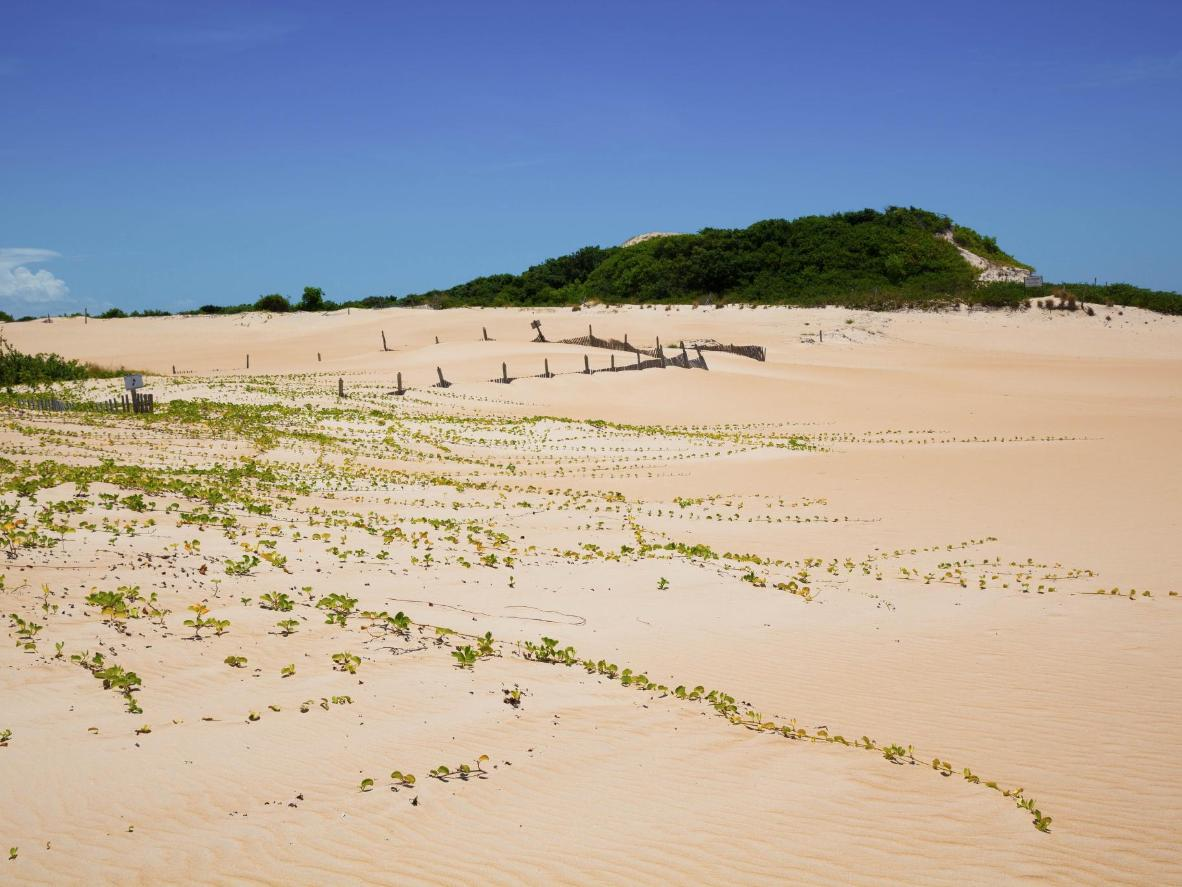Itaúnas State Park contains several different ecosystems – beach, river, swamp, mangroves, sand dunes and rainforest