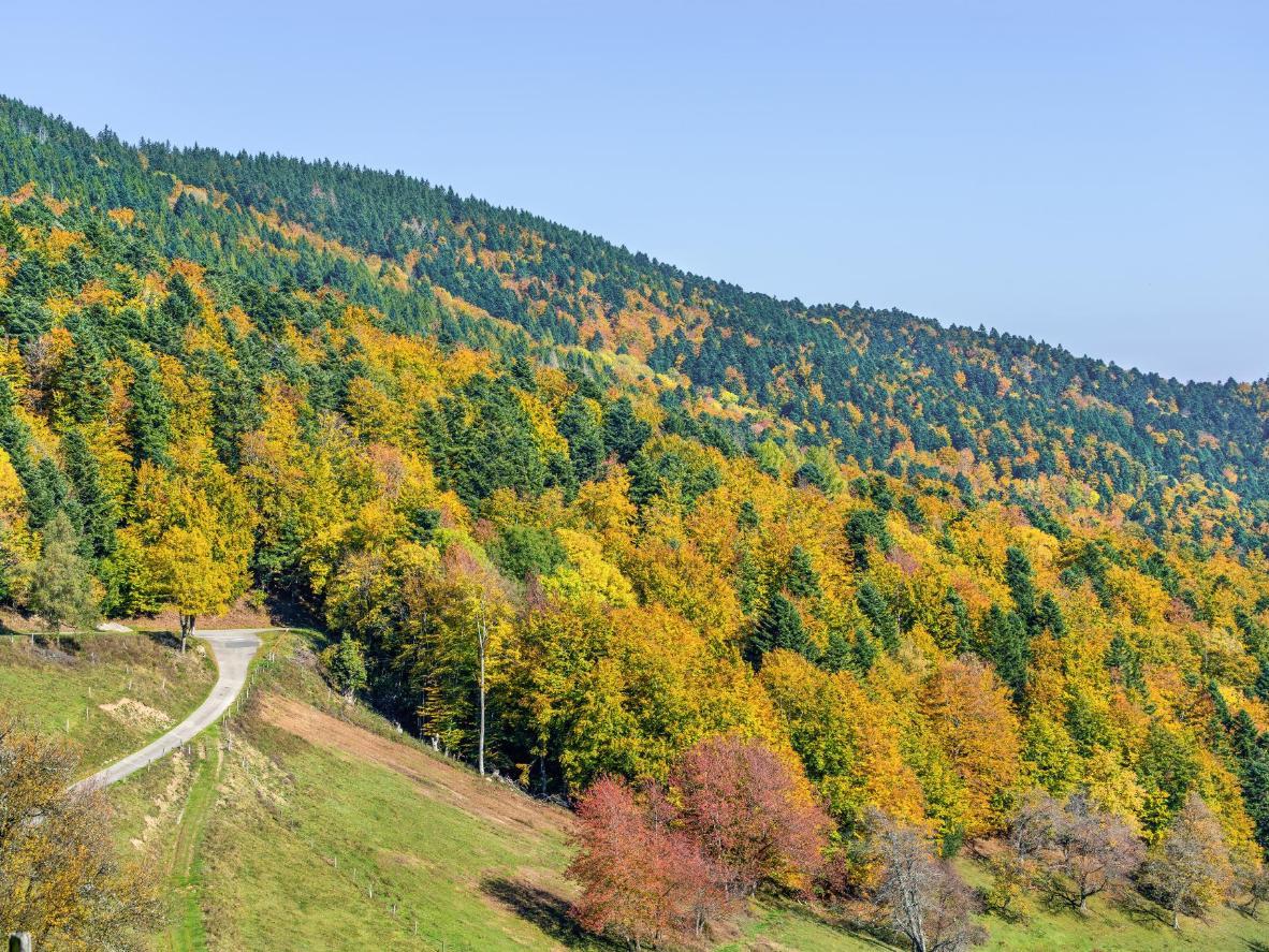 Orbey es un pueblecito situado en la bucólica región de Alsacia, famosa por sus colinas, viñedos y valles