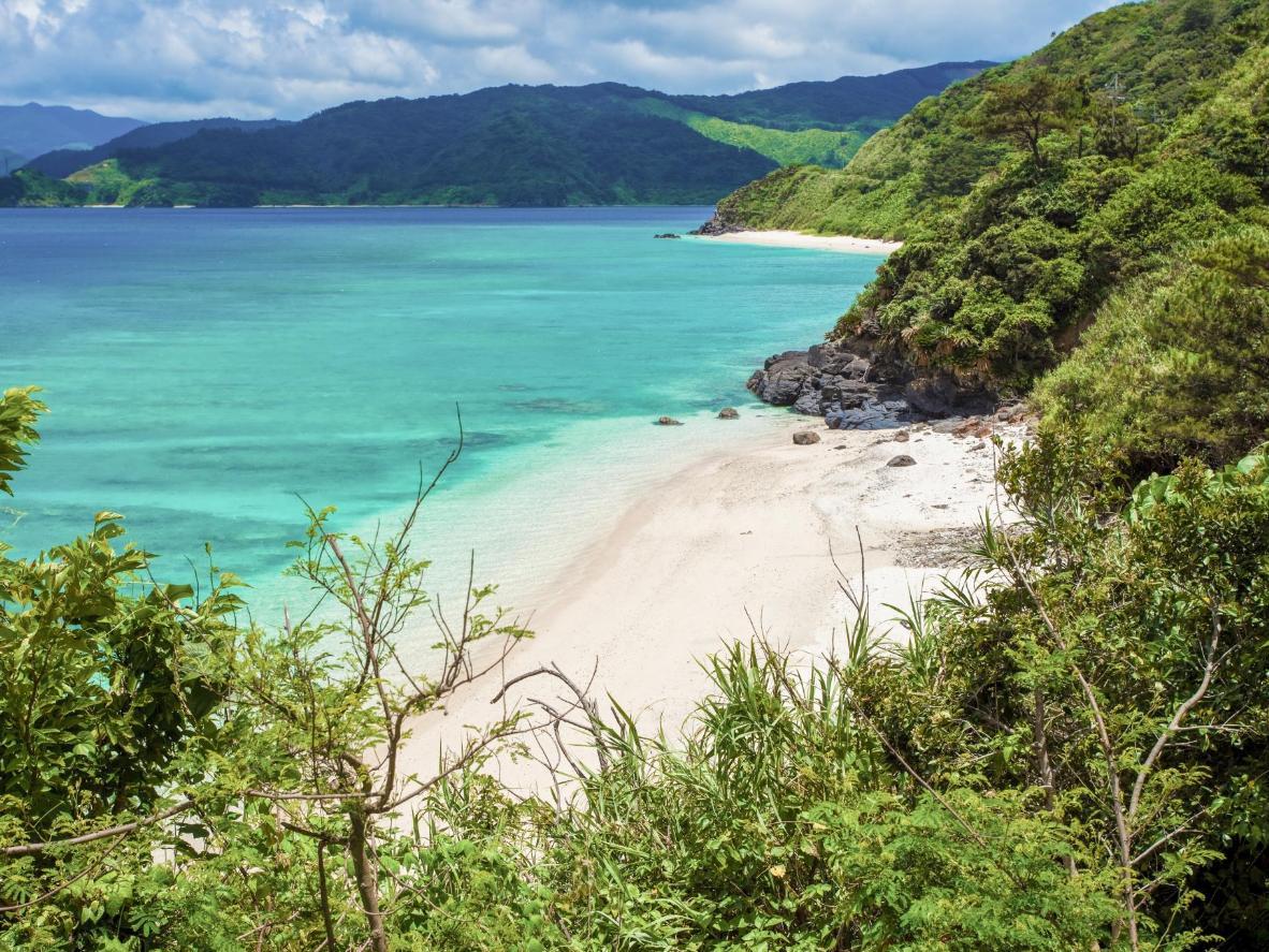 Amamisse jõudmiseks Oshimal sõida läbi hiidsõnajalgadega palistatud džunglilaadse maastiku