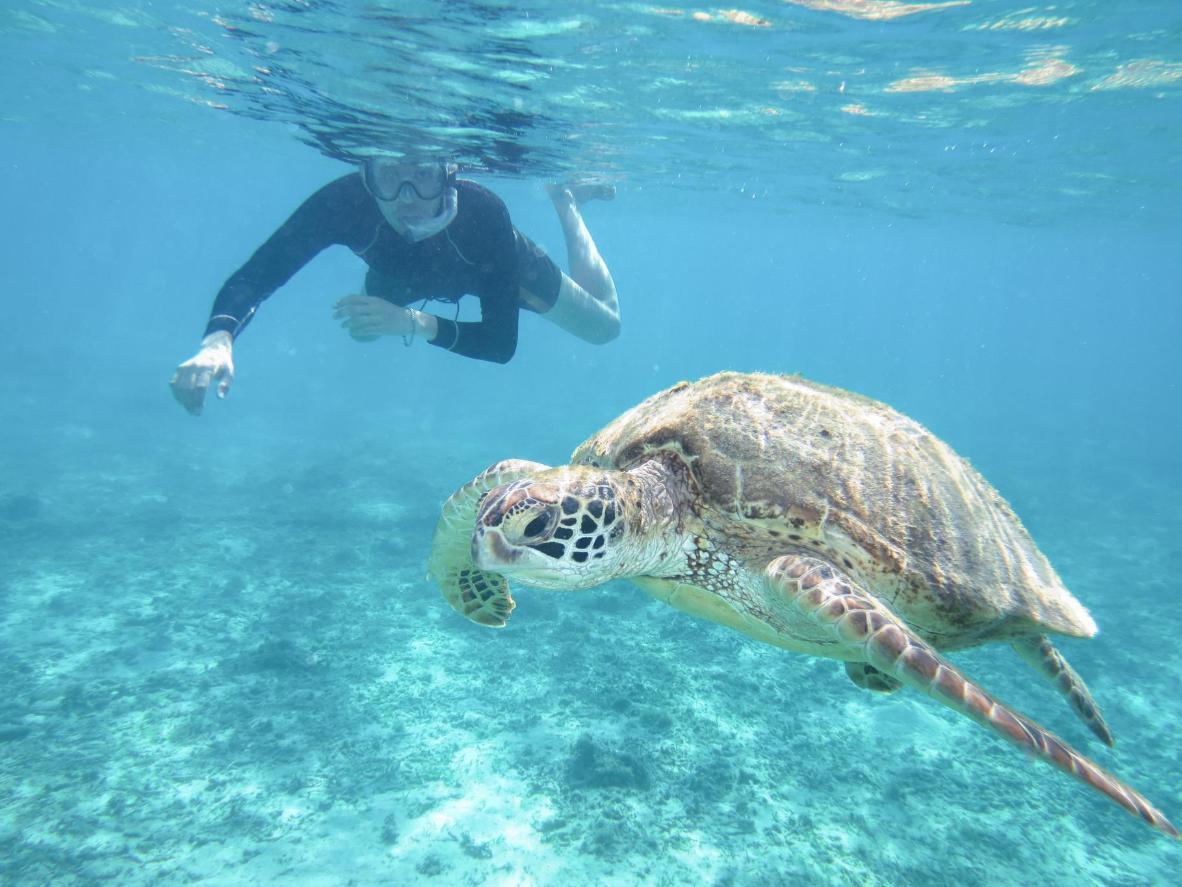 Pane ujumisprillid ette ja hoia pöialt, et näeksid Ahareni rannas kilpkonni