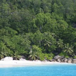 האי סילוואט