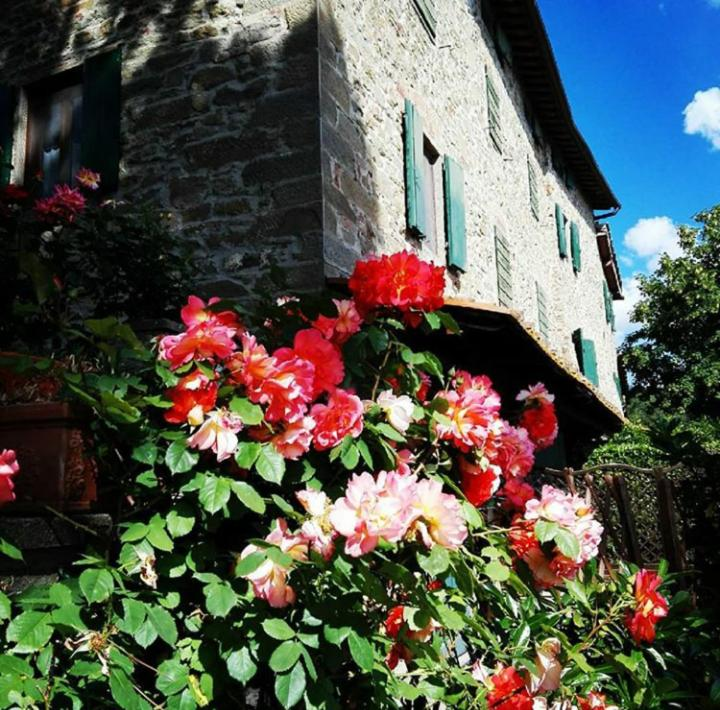 Дом для отпуска Podere I Rovai-apt IL RIFUGIO- in the heart of Tuscany - отзывы Booking