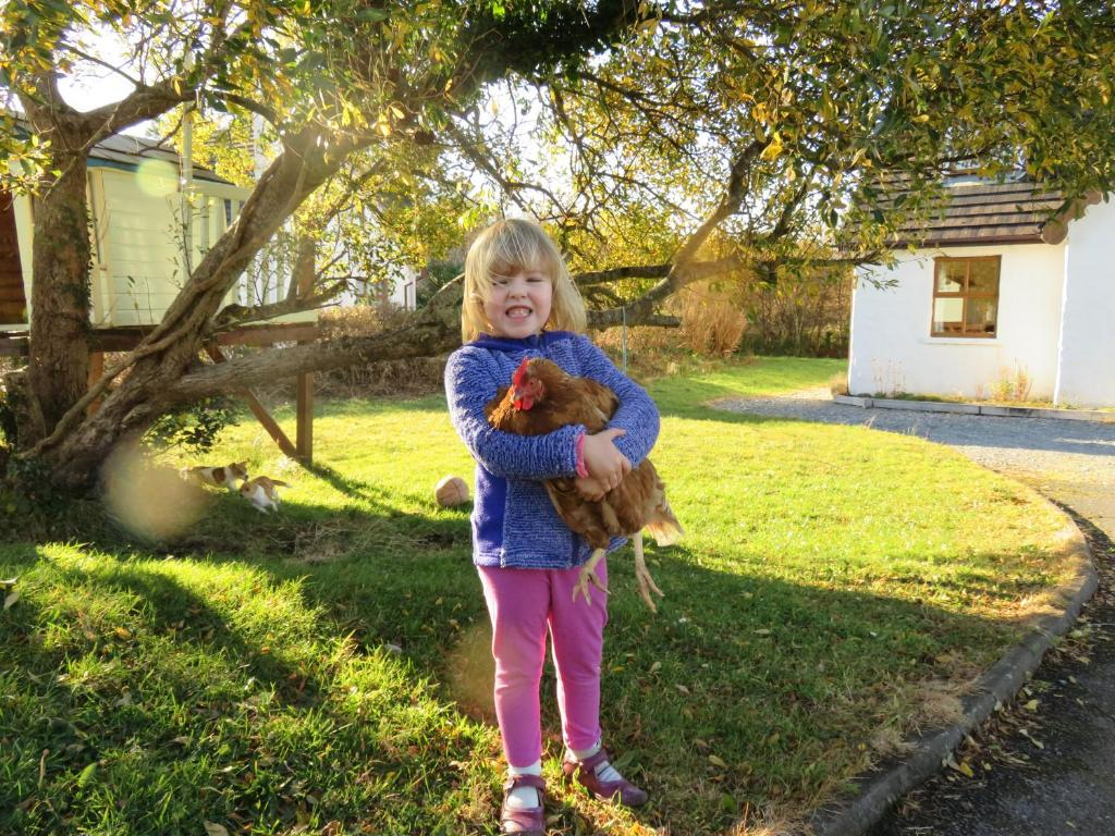 Дом для отпуска Letterfrack Farm Cottage in village on a farm beside Connemara National Park - отзывы Booking