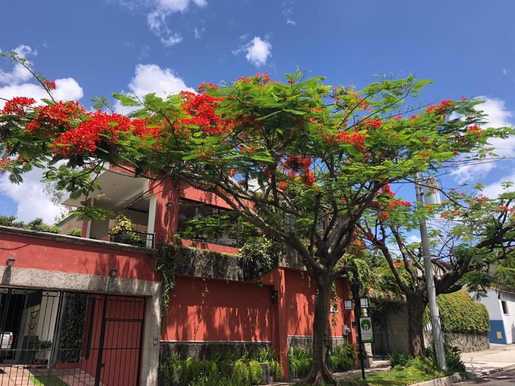 Отель  Hotel Arbol de Fuego  - отзывы Booking