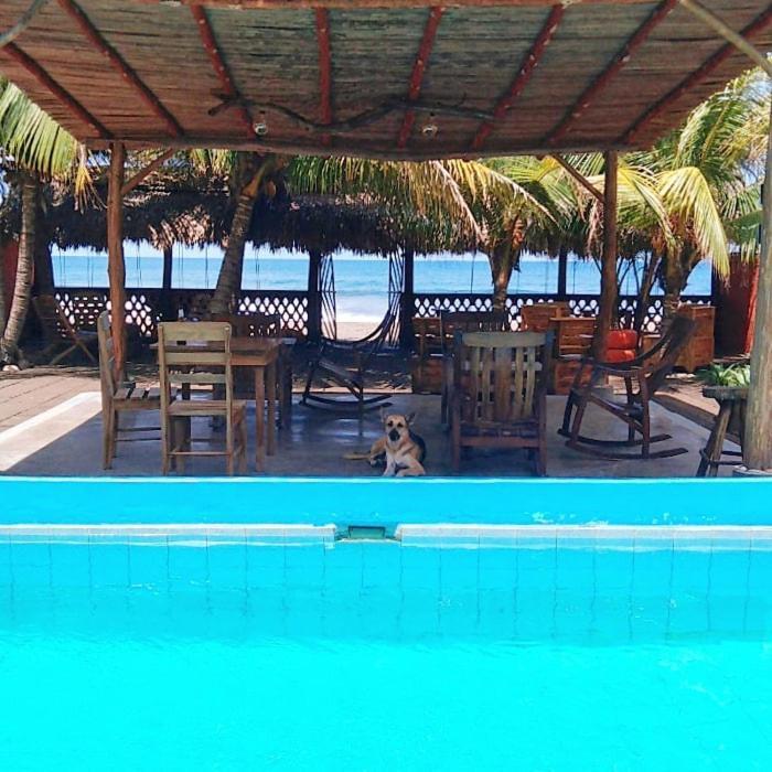 Отель  El Belga Loco  - отзывы Booking