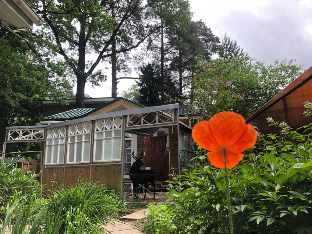 Гостевой дом  ТЕРЕМ ОК  - отзывы Booking