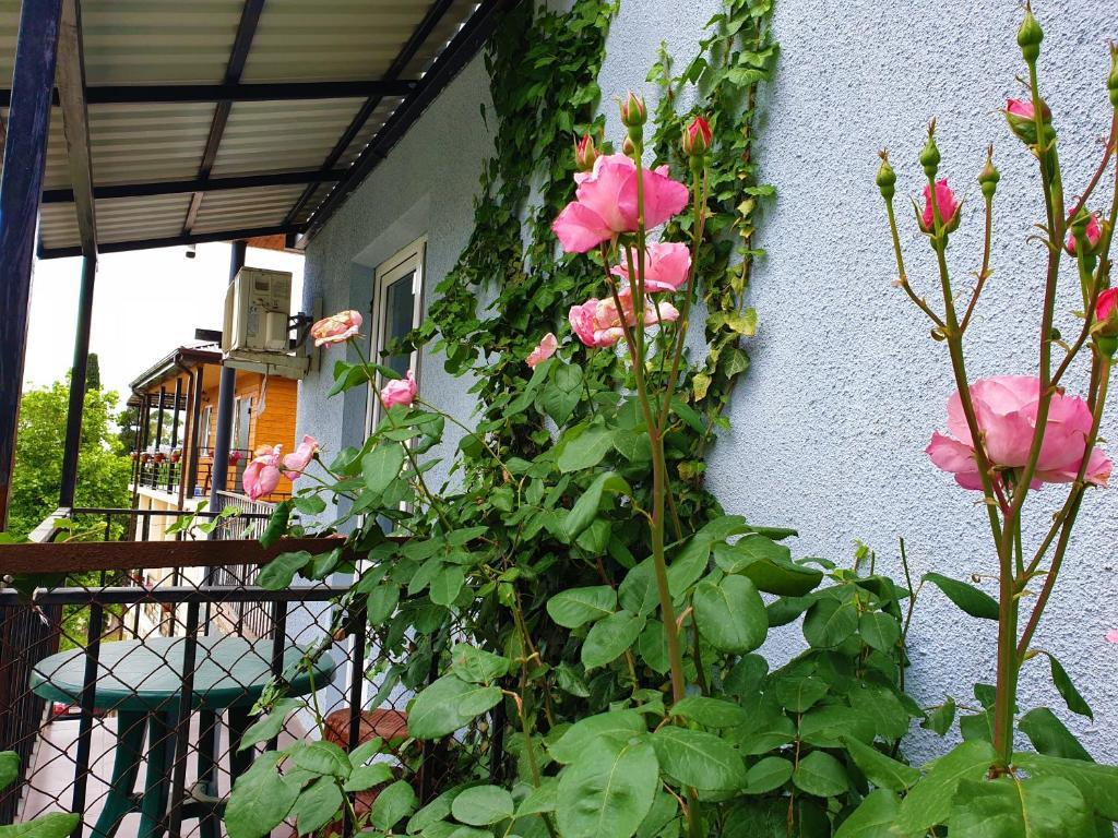 Апартаменты/квартиры  гостевой дом Susanna  - отзывы Booking