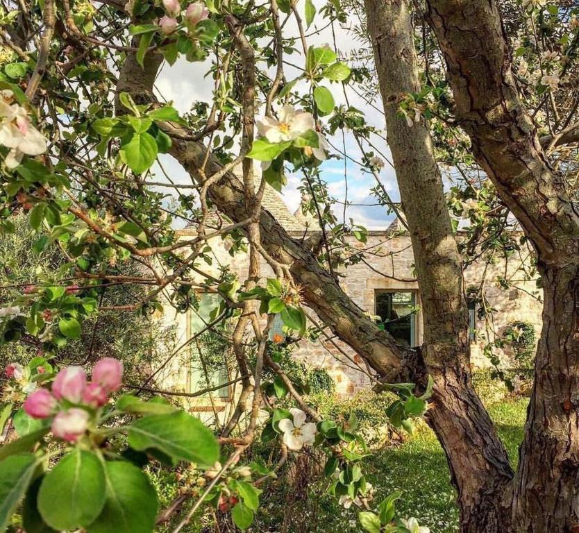 Jardín al aire libre en Lemoredinella