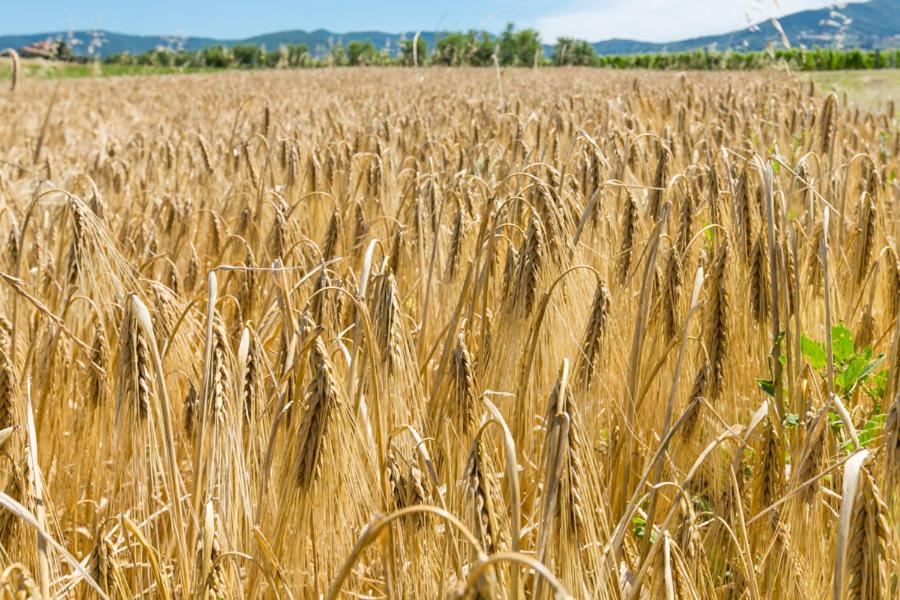 Agriturismo Case Nuove