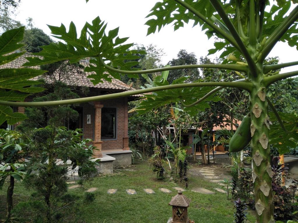 Ein Garten an der Unterkunft Dina Home Stay